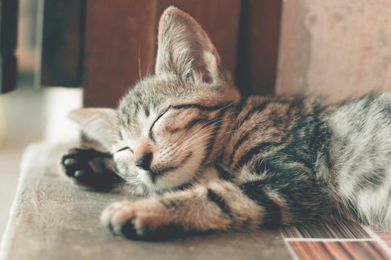寝ている 猫
